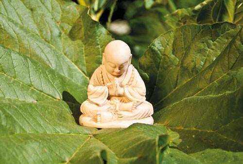 Kleiner Mönch, elfenbeinfarben